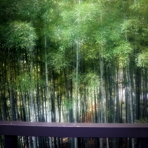 高史家から竹林