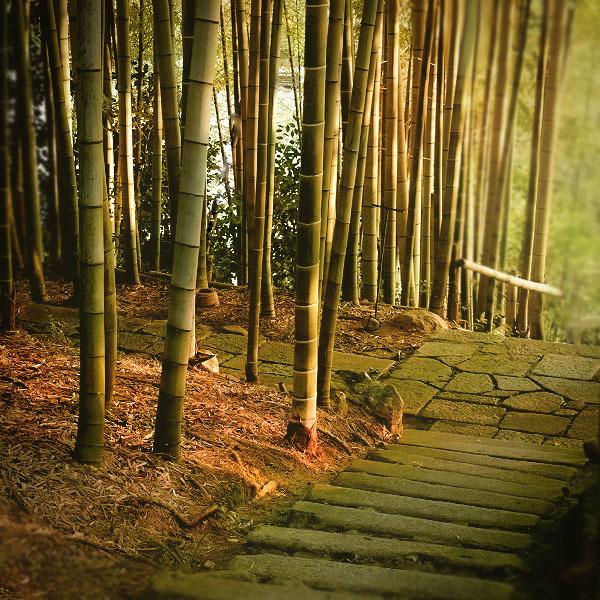 竹林と夕陽