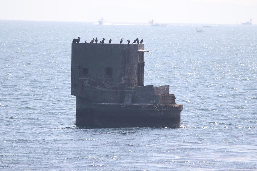 旧海軍施設の残骸と鵜の飛翔シーン_1