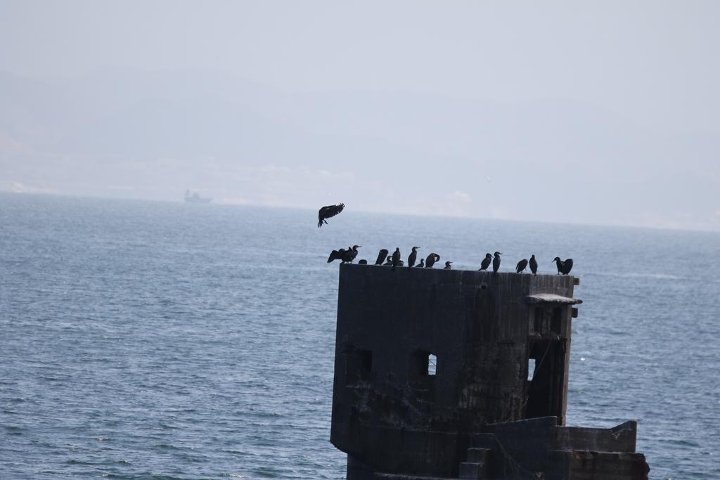 旧海軍施設の残骸と鵜の飛翔シーン_5