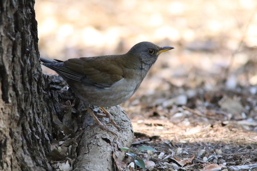 新宿御苑にはこんな鳥さんもいた_1