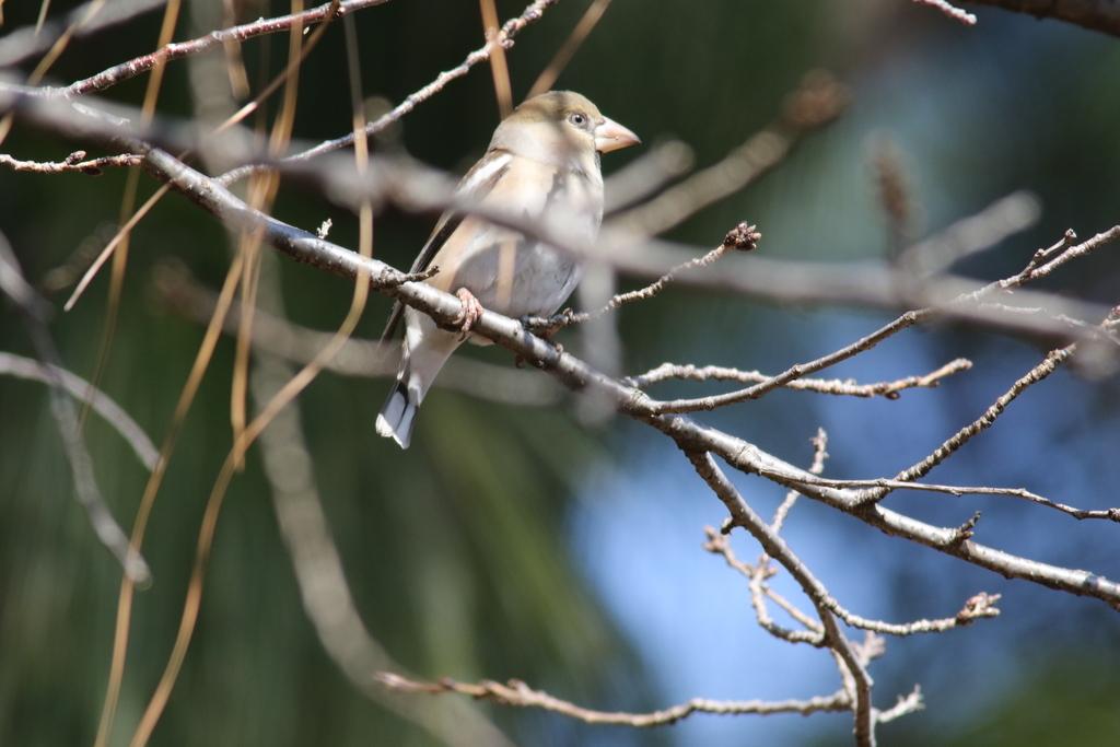 新宿御苑にはこんな鳥さんもいた_2