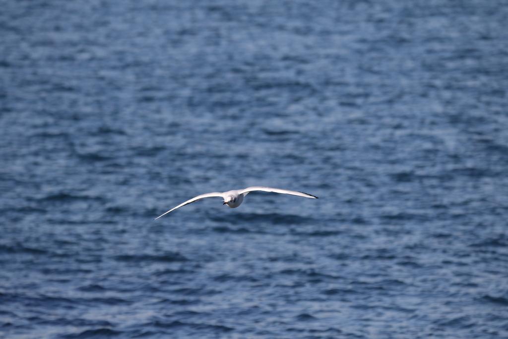 海の鳥さん_1