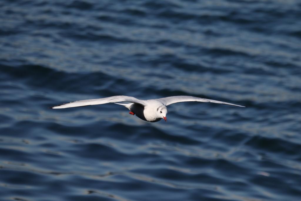 海の鳥さん_2