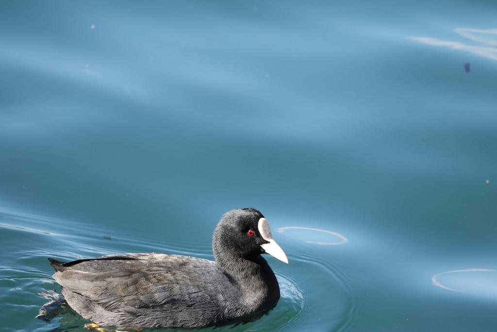 海の鳥さん_4