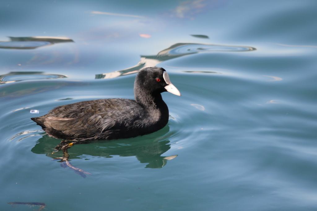 海の鳥さん_5