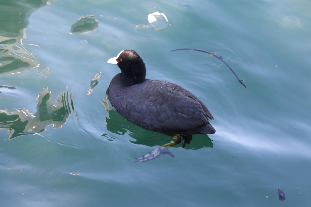海の鳥さん_7
