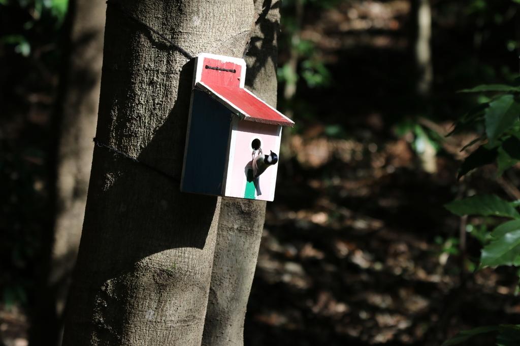 森林公園にて_15