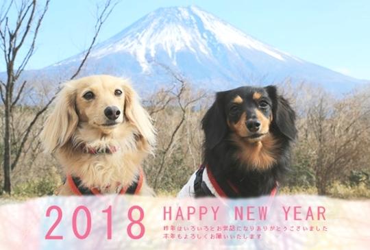 24426_nenga_fluffy年賀1ブログ