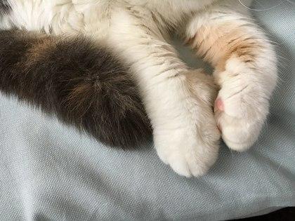 可愛いあずきの手