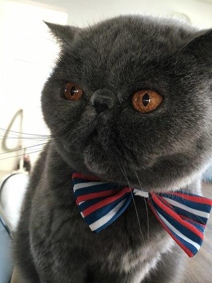 蝶ネクタイ可愛いへいちゃん