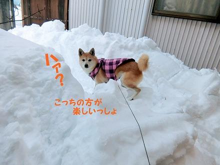 s-3ooyuki180218-1-CIMG2533