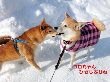 s-5ooyuki180226-CIMG2701