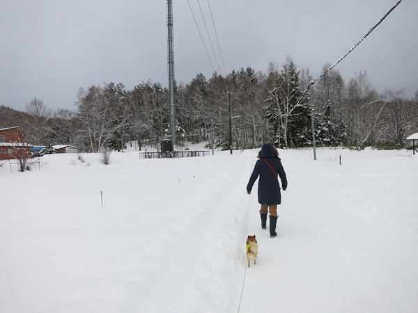 雪の初詣 茶太郎