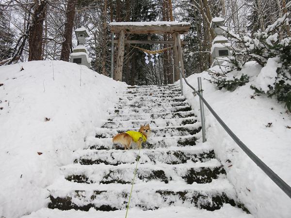 雪の初詣 藤野沢神社 茶太郎