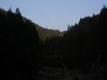 180224杉木立の上り基調を行く