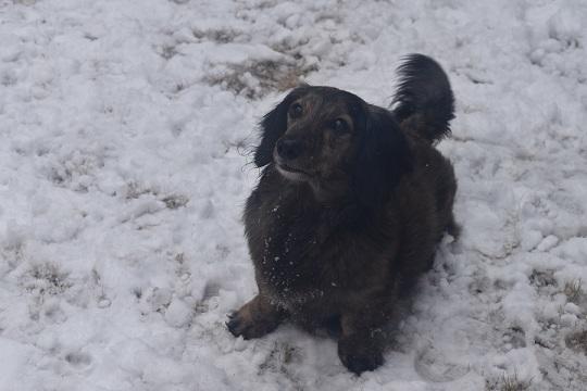 雪モモコ1