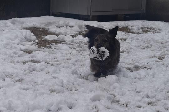 雪モモコ3