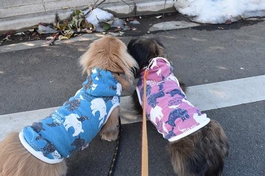 モモコお散歩1