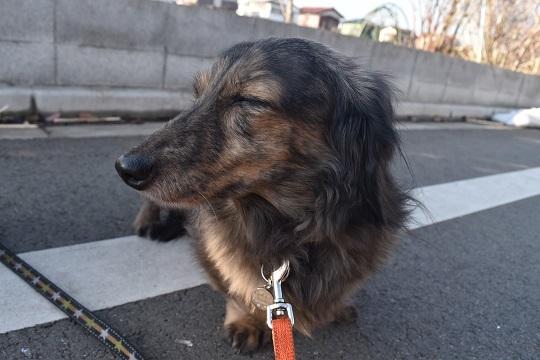 モモコお散歩2