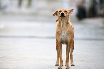 Homeless dog (1)