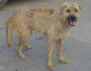 Homeless dog (3)