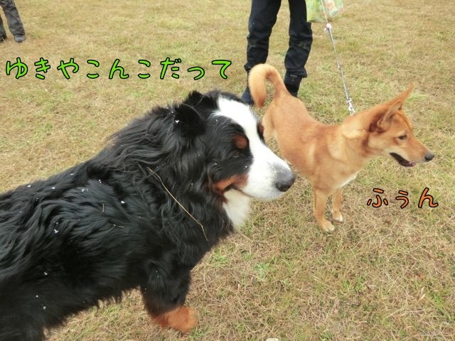 CIMG7946_20180114070730b4d.jpg