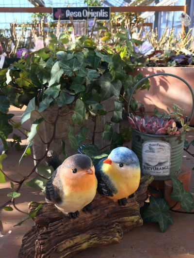 ブログ0120森の小鳥カップル