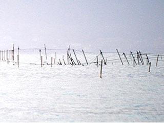 台風21号の影響でズタボロになった野洲市沖のエリ