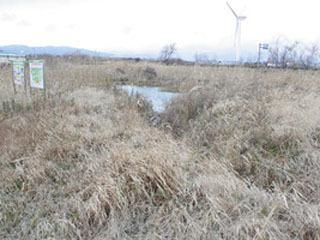 荒れ放題になった下物湖畔のビオトープ