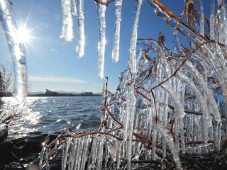 草津湖岸で見事に発達したしぶき氷