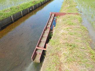 魚のゆりかご水田に設けられた魚道