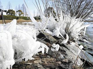木浜湖岸のしぶき氷