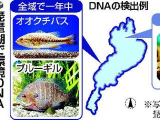 琵琶湖での環境DNA調査