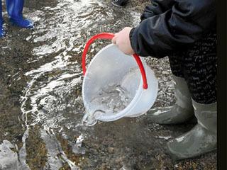 栗東市の小学生が育てたワタカの稚魚を琵琶湖に放流
