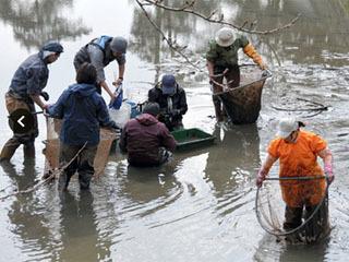小倉城の濠で水抜き石垣調査
