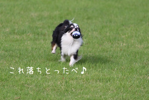 IMG_0517.jpg