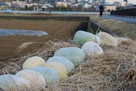 01恩田川沿いの畑