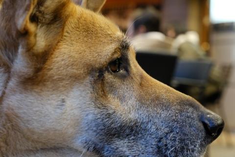 08コンサートの犬