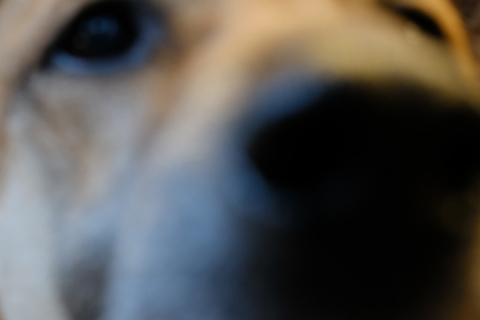 09コンサートの犬