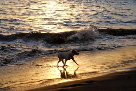 12江の島イヌ