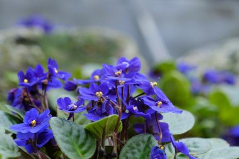 18青い花