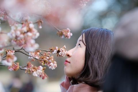 23桜をかぐ