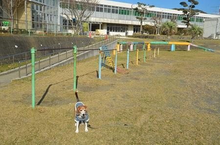 20171125神戸小学校16