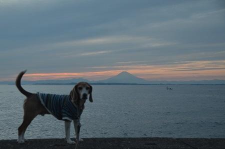 20171125房総半島(鋸南町)からの富士06