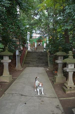 20171201麻賀多神社05