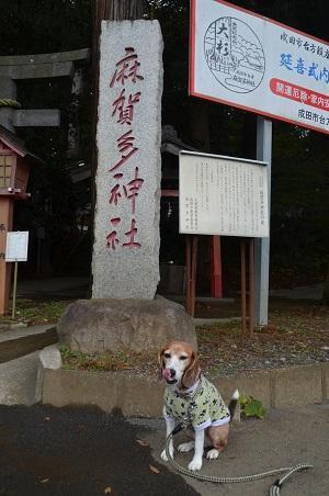 20171201麻賀多神社01