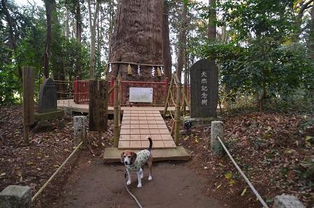 20171201麻賀多神社23