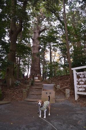 20171201麻賀多神社21