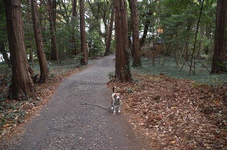 20171201麻賀多神社29